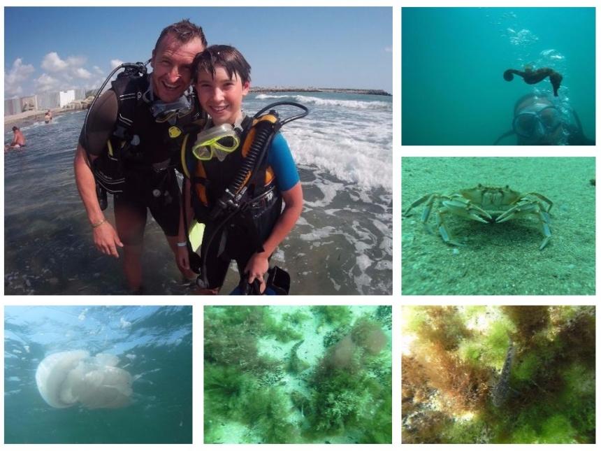 Pierderea de grăsime la scuba diving, Traducere