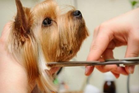 Cosmetica Caini Si Pisici Tuns Spalare Uscata Vidare Glande
